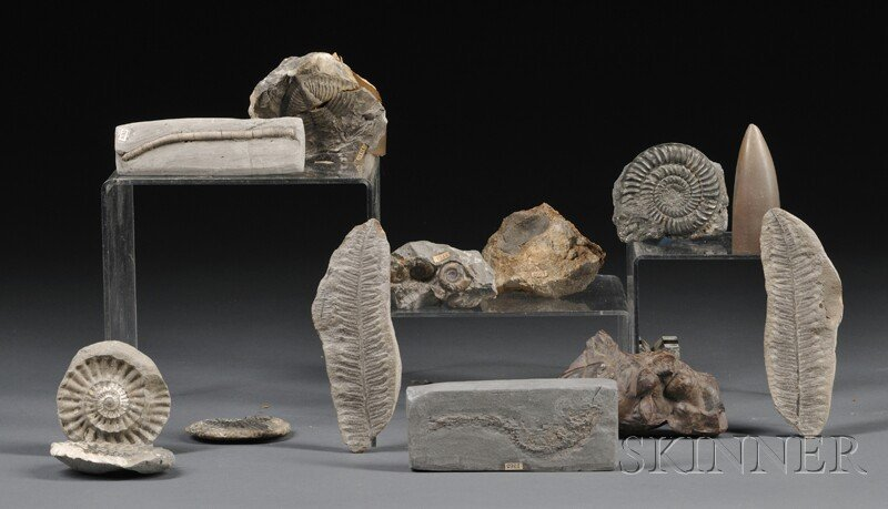 125: Group of Fossils Europe and North America Many wit