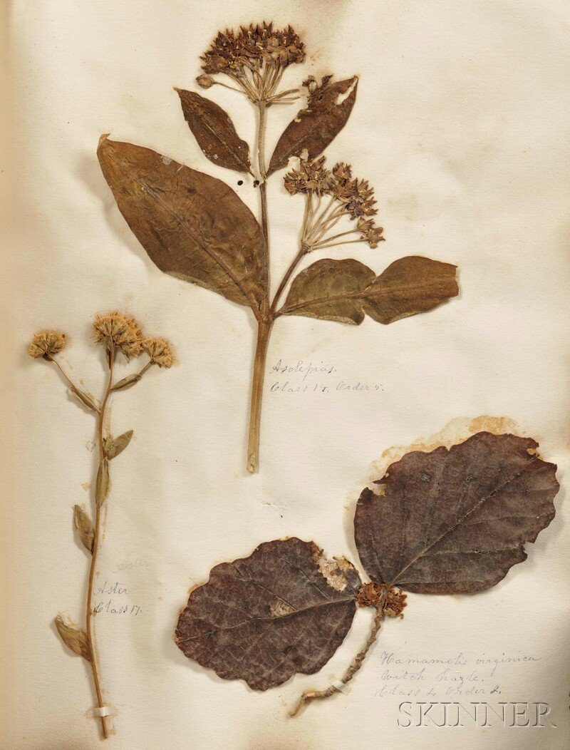 130: Medicinal Herbarium Scrapbook, c. 1850, containing