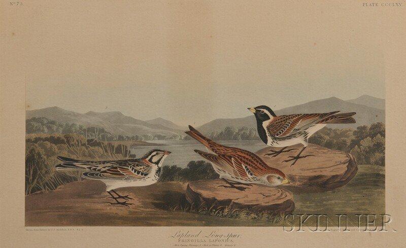 Audubon, John James (1785-1851) Lapland Long-spur.  Pla