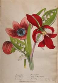 Newman, John B. (fl. circa 1840) Illustrated Botany. Ne