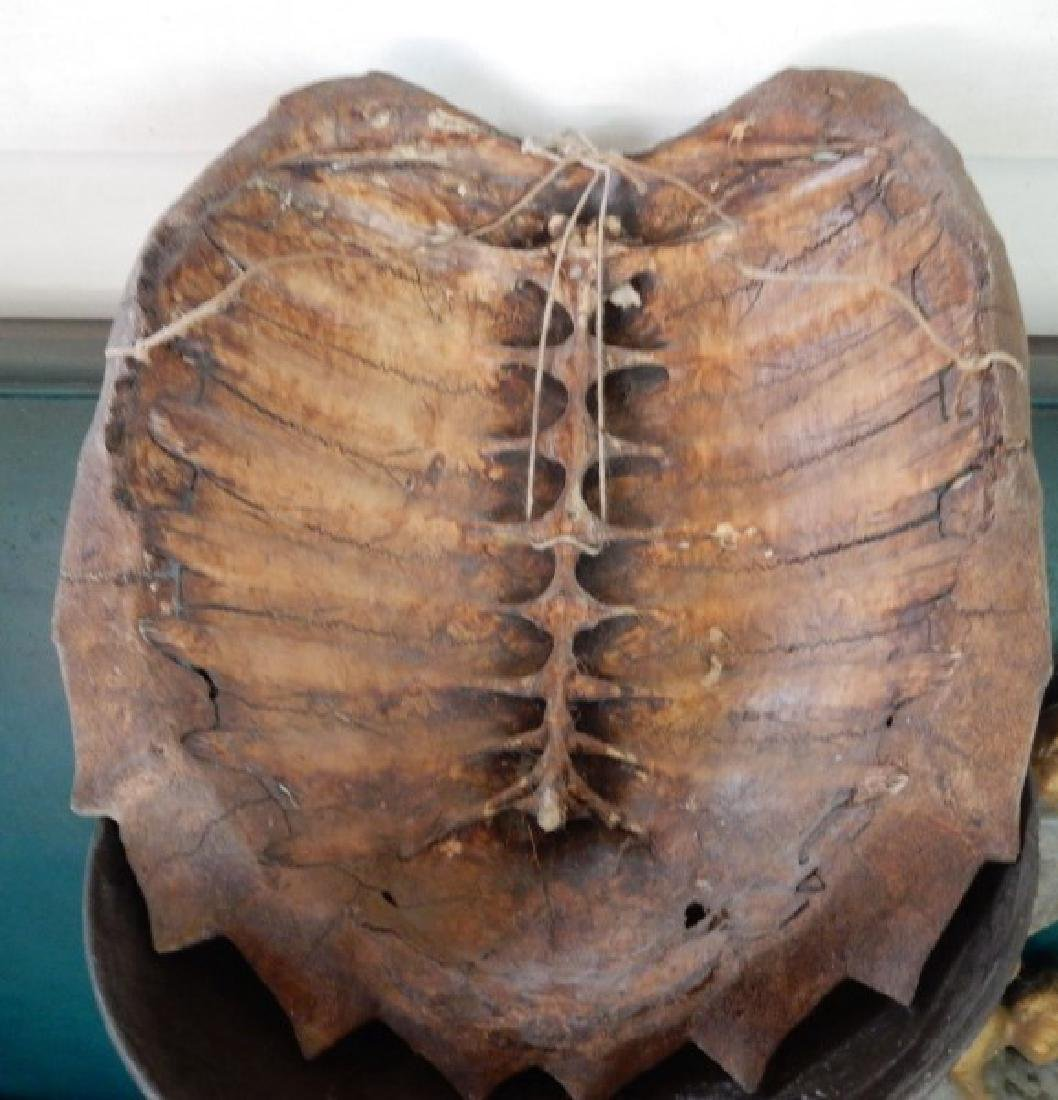 Turtle Shell - 2