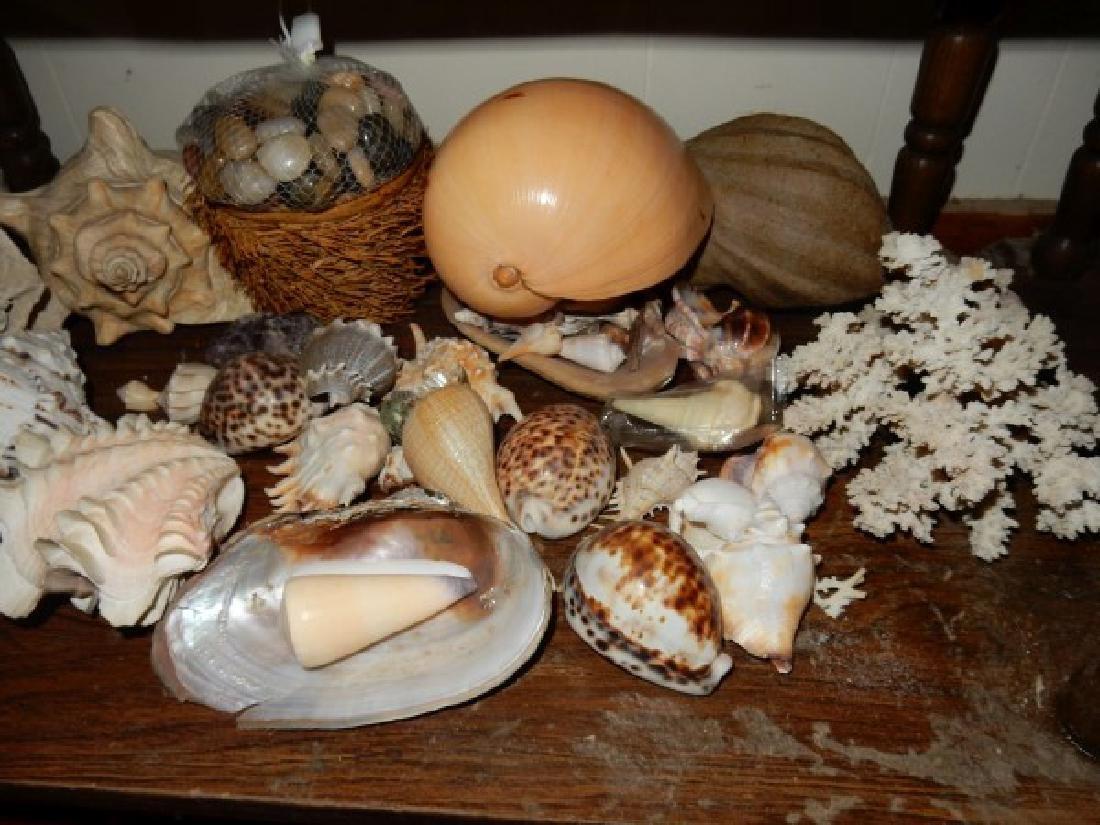 Shells - 4
