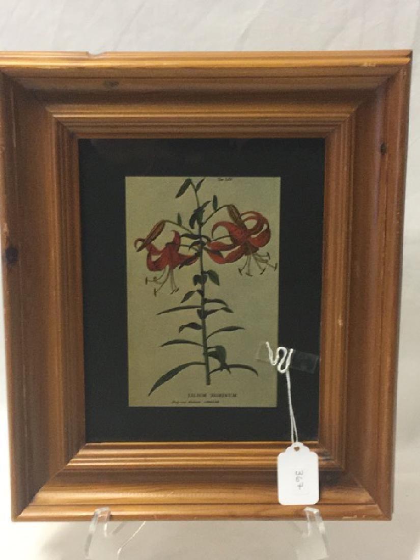 Framed Botanical Print - Lilium Tigrinum