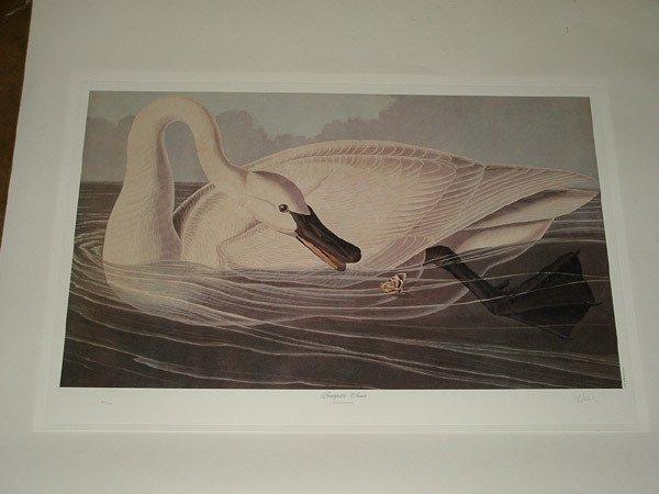 1981: Lithographs, M.Bernard Loates, after Audubon
