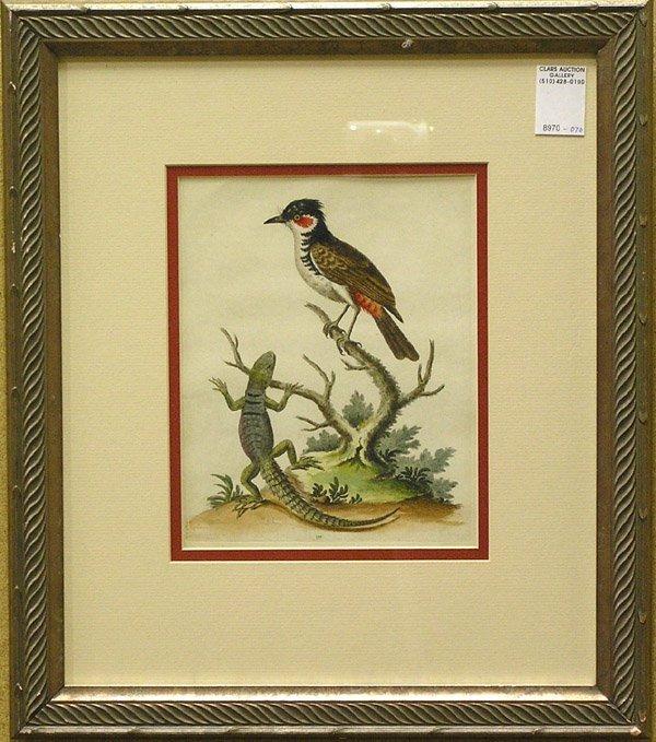 2004: Engravings George Edwards British Birds