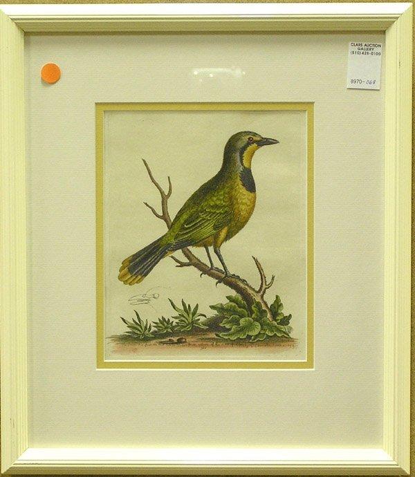 2005: Engravings George Edwards Bird British