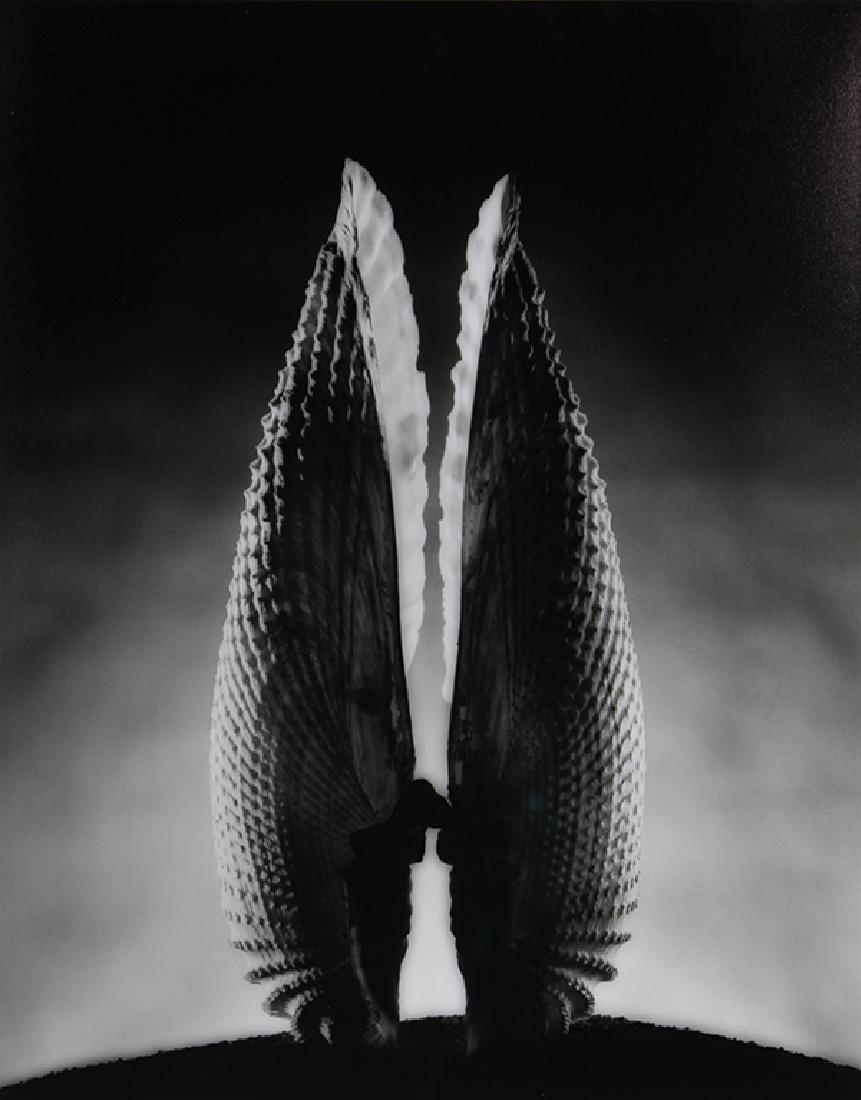 Photograph, Ruth Bernhard