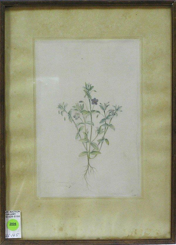 2006: Botanical painting 18th century vellum