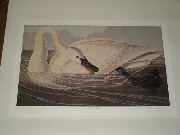 6020A: Lithographs, after Audubon, M.Bernard Loates