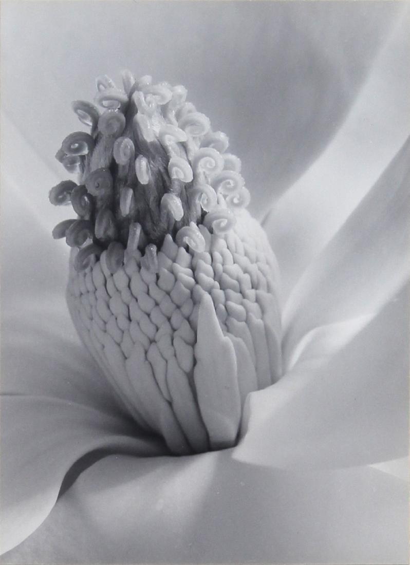 Photograph, Imogen Cunningham