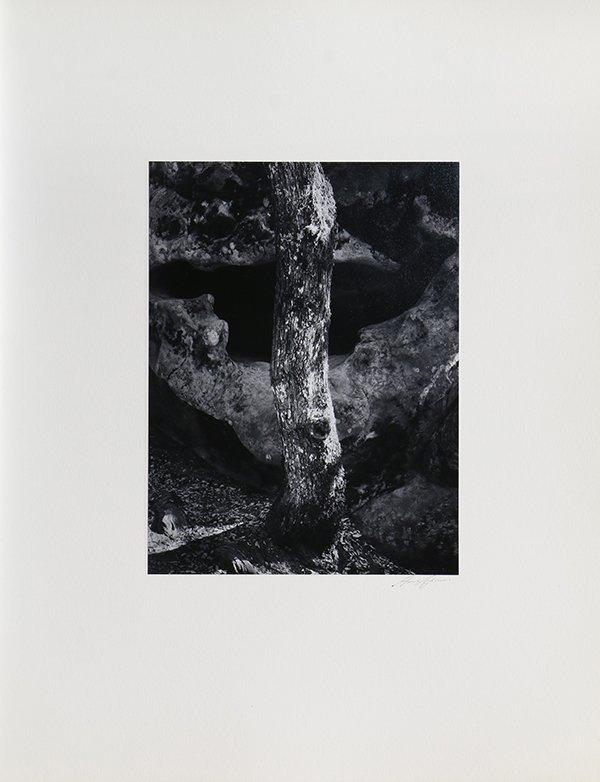 Portfolio, Ansel Adams - 10