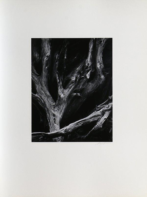 Portfolio, Ansel Adams - 3