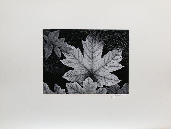 Portfolio, Ansel Adams - 4