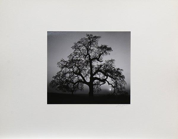 Portfolio, Ansel Adams - 9