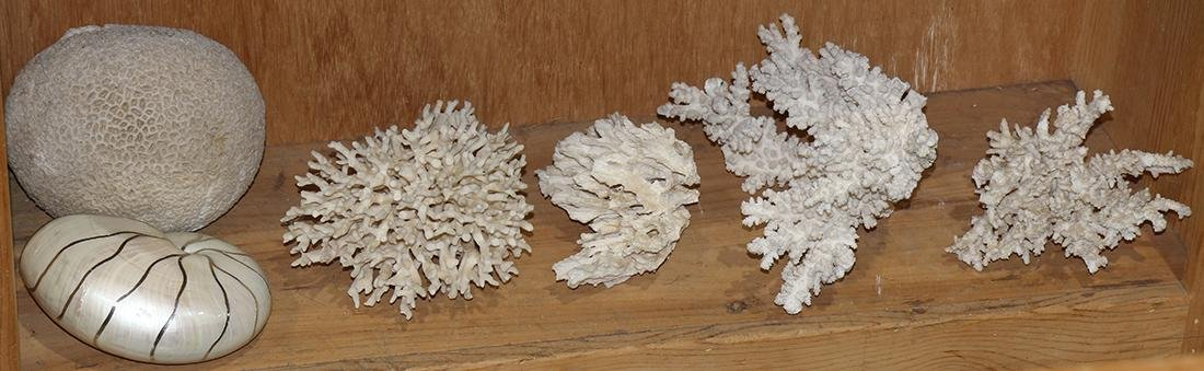 One shelf of natural shells and coral