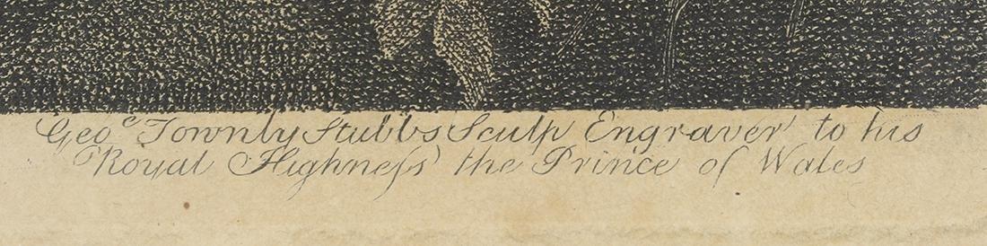 Print, George Stubbs - 6
