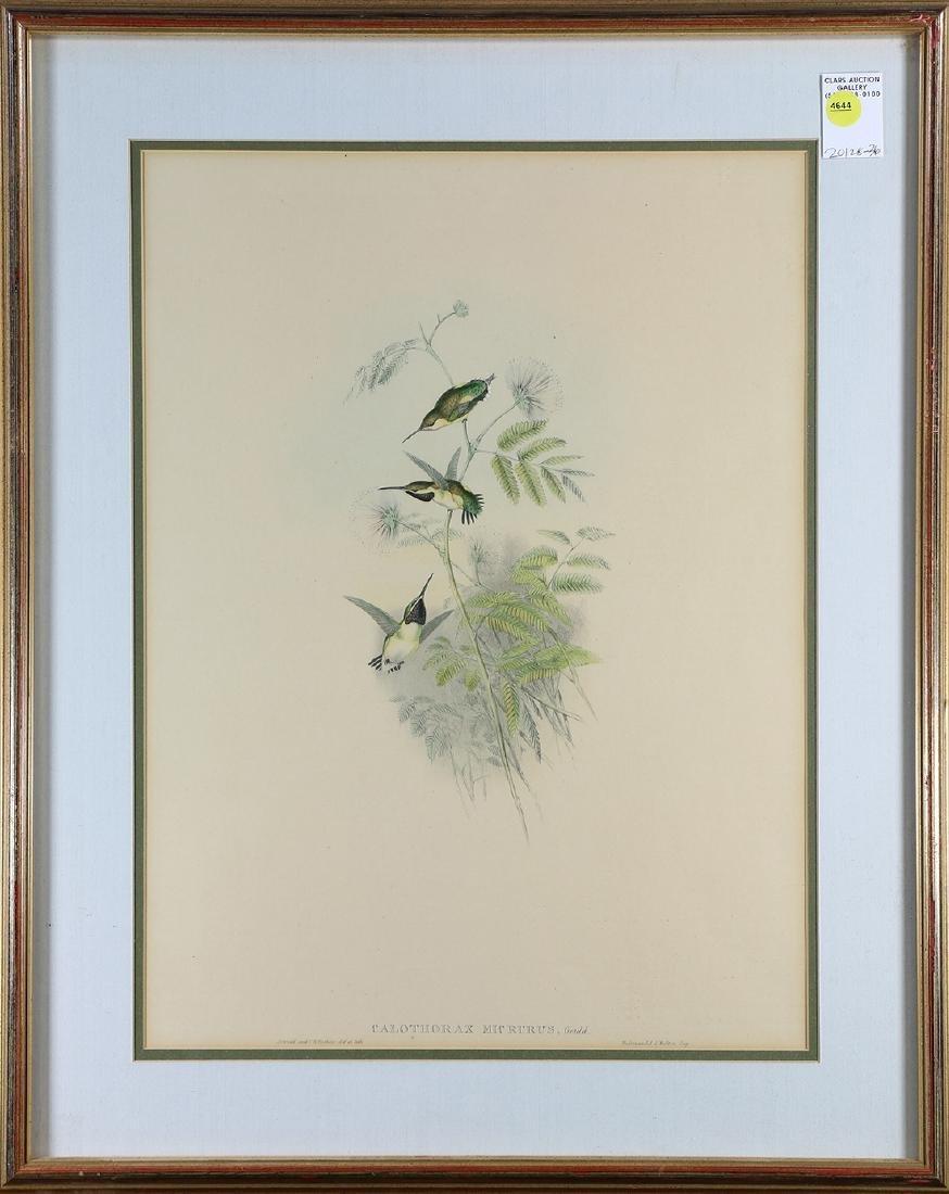 Print, John Gould