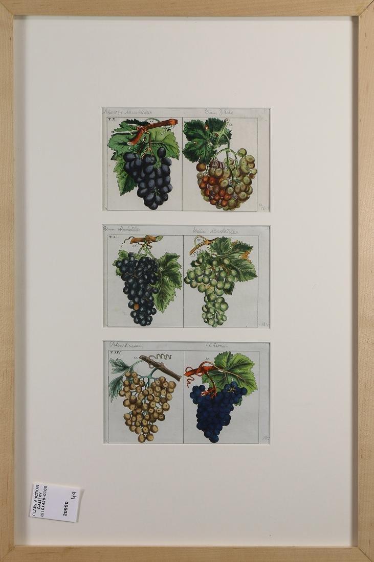 Prints, Georg Daniel Heumann, Grapes