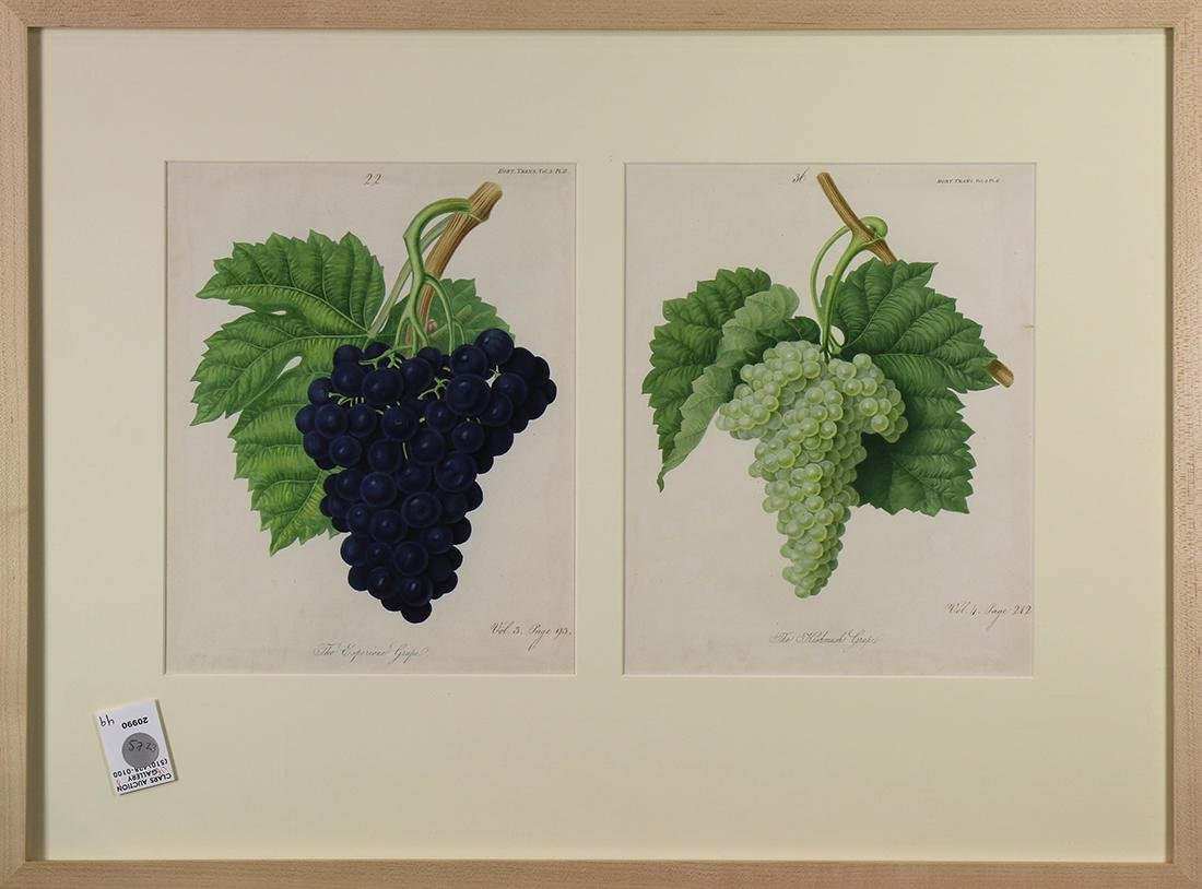 Prints, Pleasant Valley Vineyards, New York, Grape