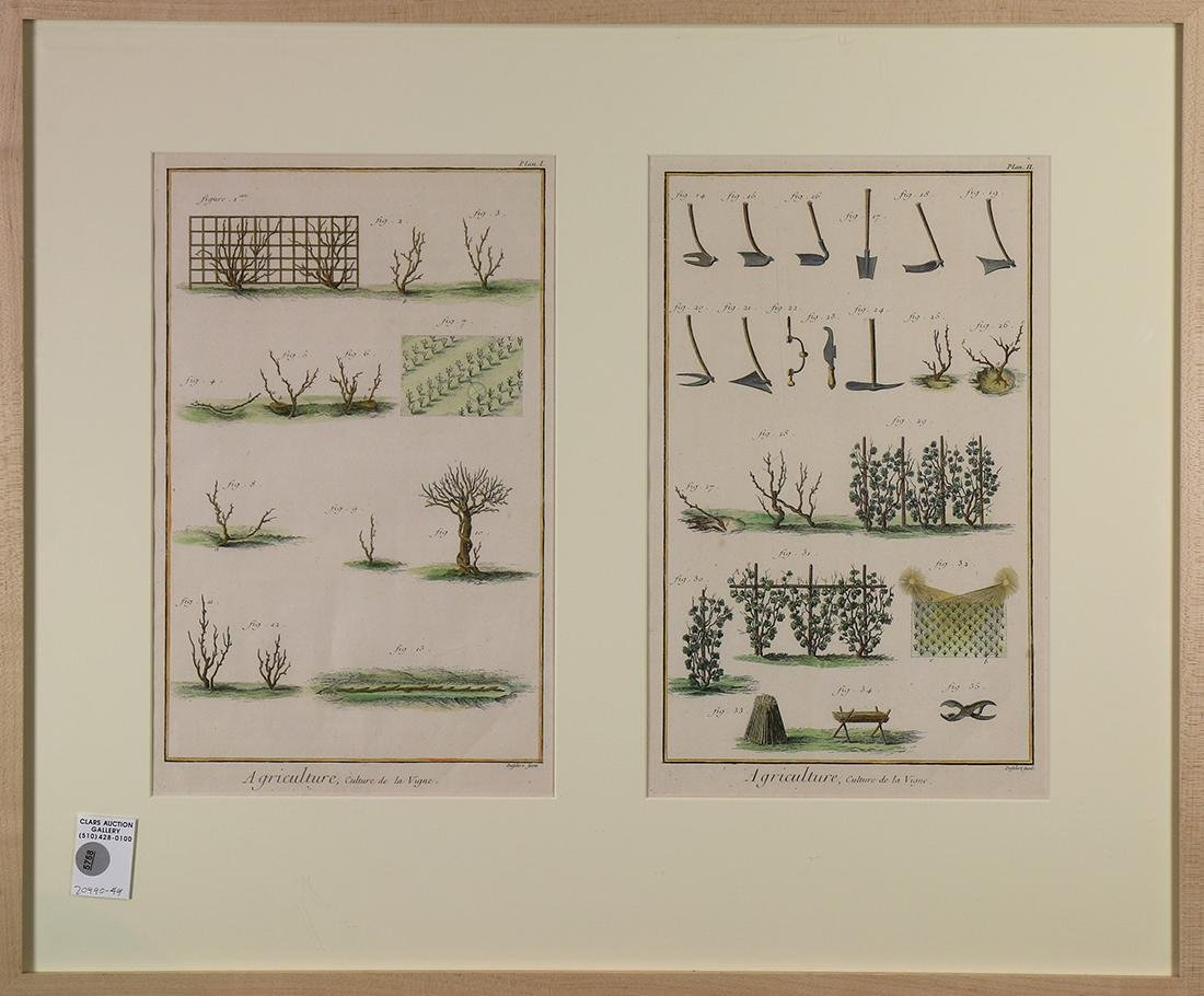 Prints, Agricultural Figures for Vineyards