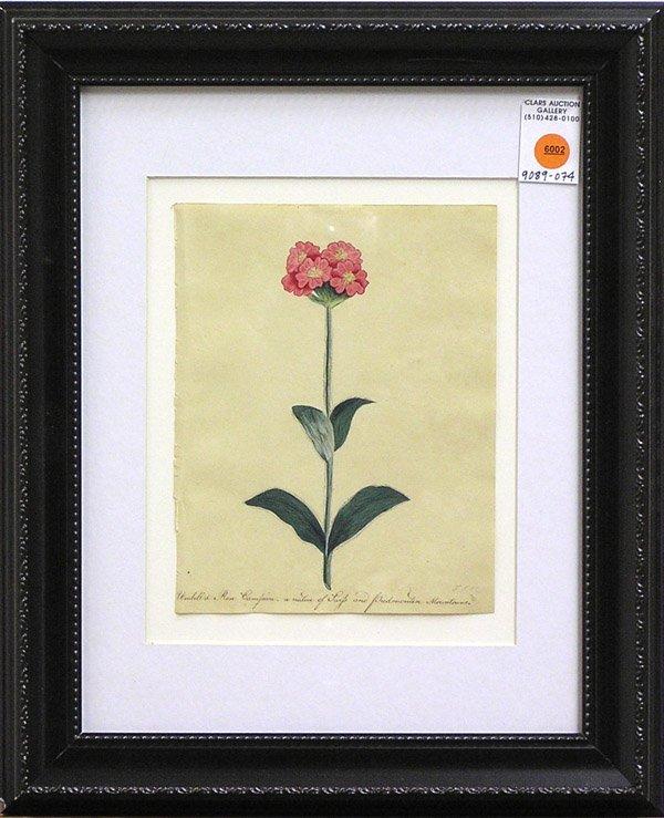 6002: Watercolors botanicals Frances Ketchum