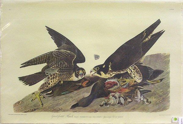 2362: offset prints after Audubon Amsterdam