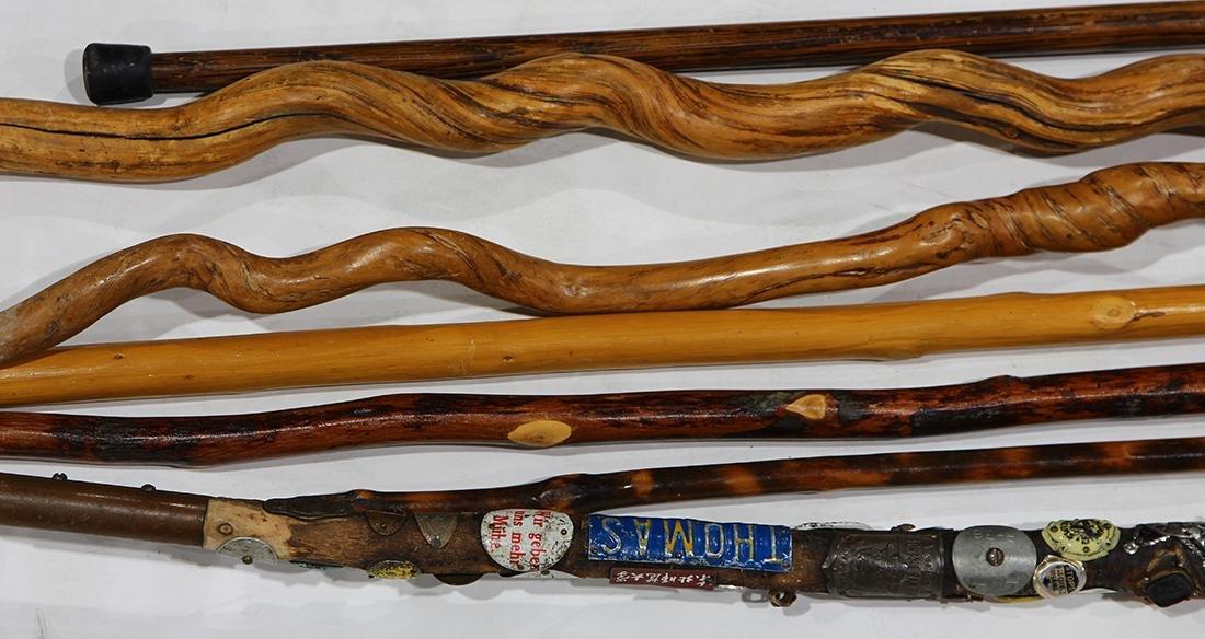 Walking stick group - 3