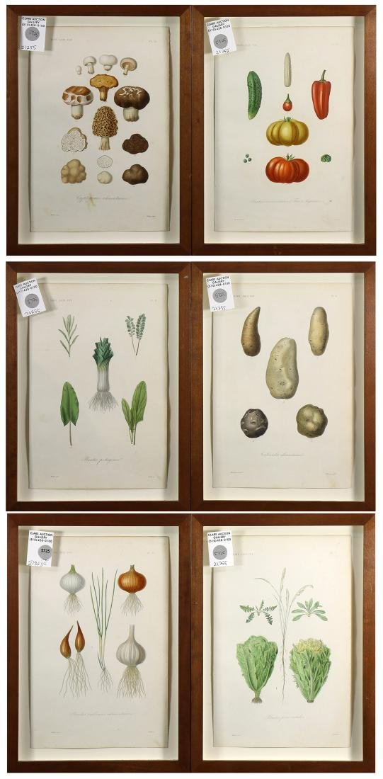 Horticultural and Vegetable Prints