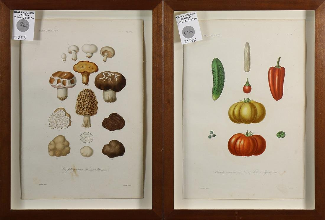 Horticultural and Vegetable Prints - 2