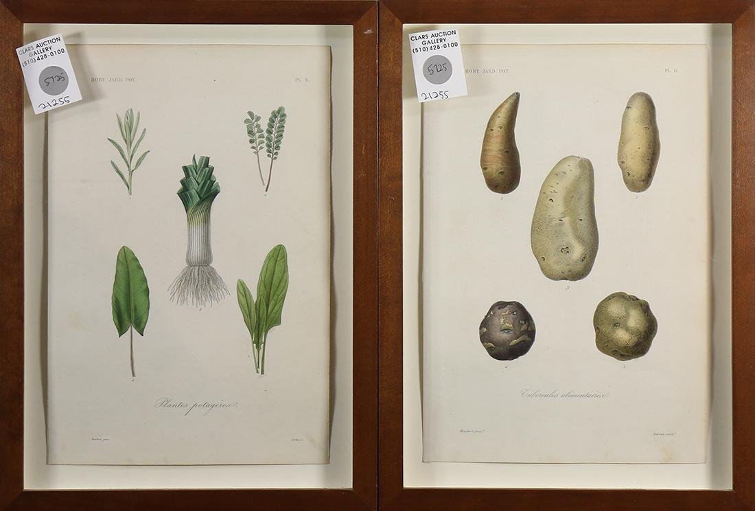 Horticultural and Vegetable Prints - 3