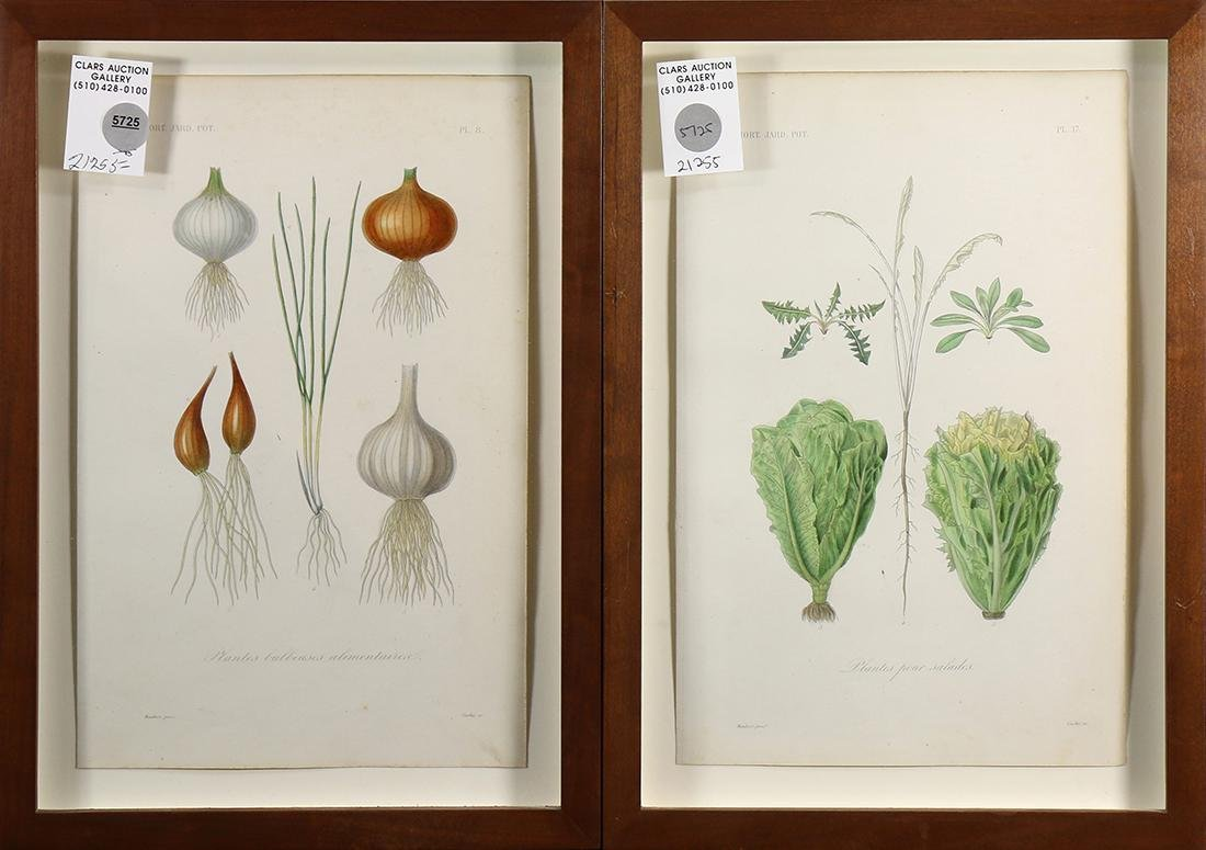 Horticultural and Vegetable Prints - 4