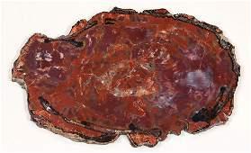 Petrified rock specimen