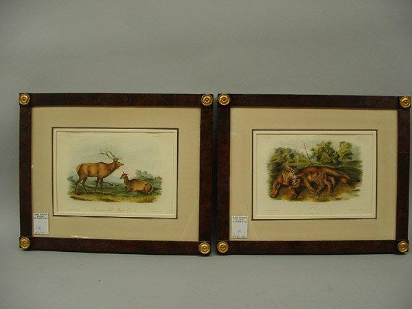 6496: Lithographs, J.T. Bowen after J.J. Audubon