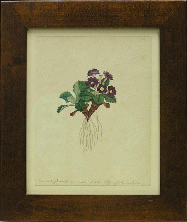 6005: Watercolors, Louisa Ketchum, American