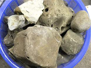 Fossils, chalcedony, Jasper, Agates,