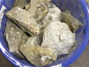 Petrified wood, fossils, quartz