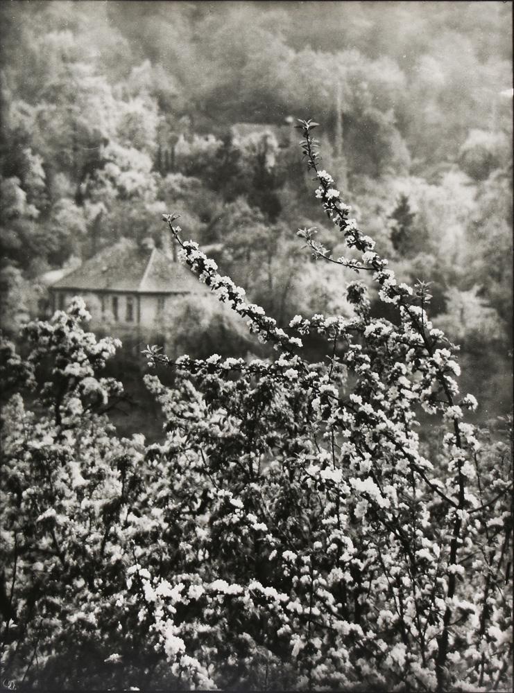 Photograph, Josef Sudek