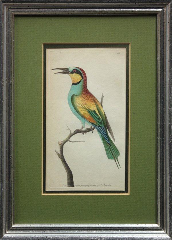 6012: Tropical Birds
