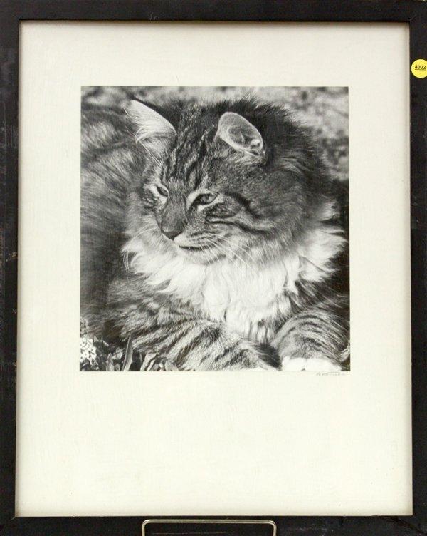 4002: Photographs, Cat and Seashore