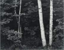 Photograph, John Sexton