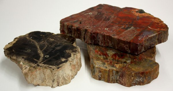 4016: Petrified wood bases,