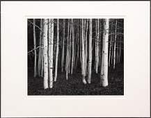 2274: Photograph, John Sexton, Aspen Dusk