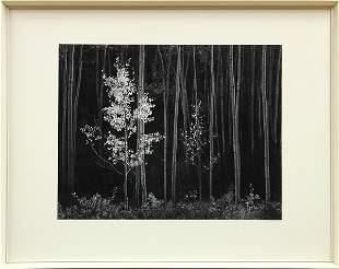 2195: Photograph, Ansel Adams, Aspens, Northern NM