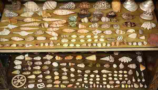 (lot of 200 plus) Extensive collection of sea shells