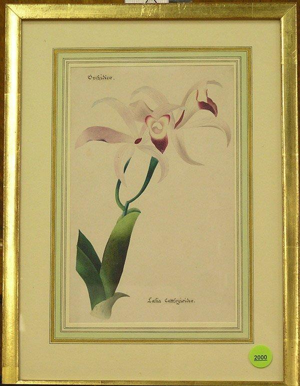 2000: 19th century botanical watercolors