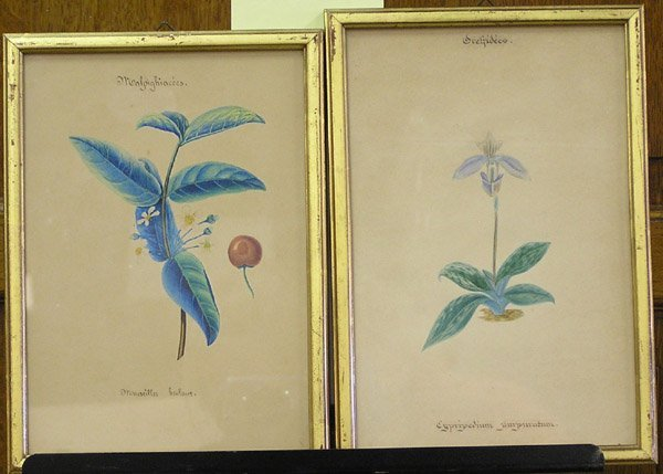 2001: 19th century botanical watercolors