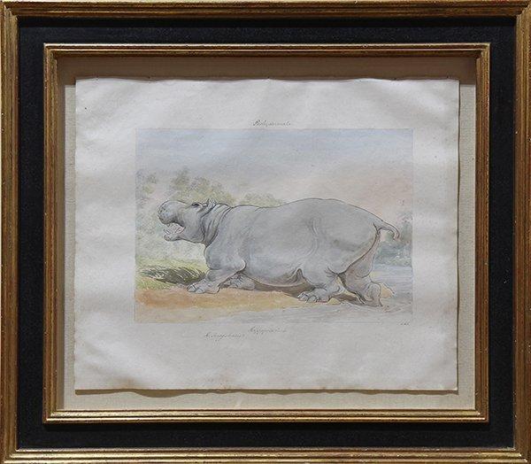"""Watercolor, """"Pachydermata, Hippopotamus"""" - 2"""