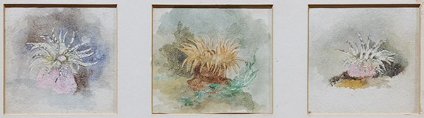Watercolors, John Ruskin