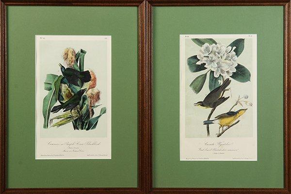 Assorted prints of birds