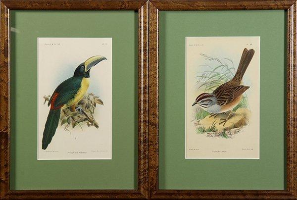 Assorted prints of birds - 2